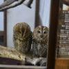 静岡旅行に行ってきました:掛川花鳥園編その1