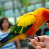 静岡旅行に行ってきました:掛川花鳥園編その2