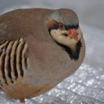 静岡旅行に行ってきました:掛川花鳥園編その3