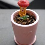 フラクタル植物2年目の7月。