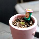 フラクタル植物2年目の6月。