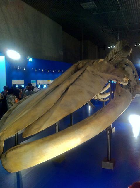 でかすぎシロナガスクジラ。