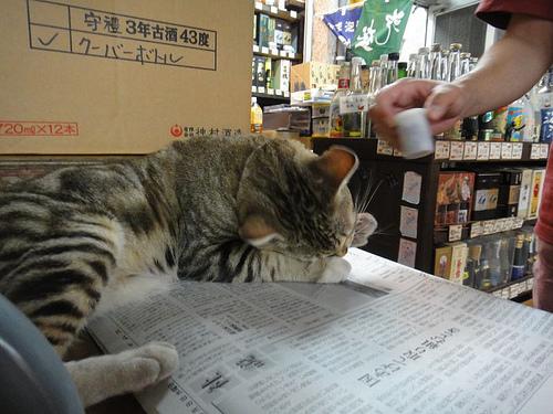 猫 威助(にゃん うぇいつ)店長