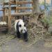 1歳9ヶ月と上野動物園に行ってきました