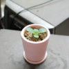 フラクタル植物2年目の8月。